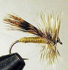 Boomer's Thorax Caddis